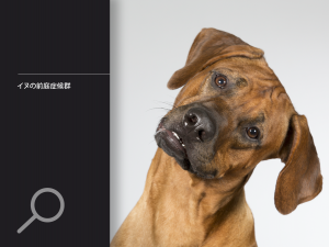 イヌの前庭症候群