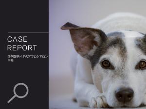 イヌのアフロクアロン中毒