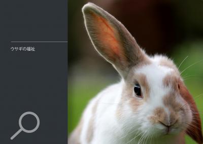 ウサギの福祉